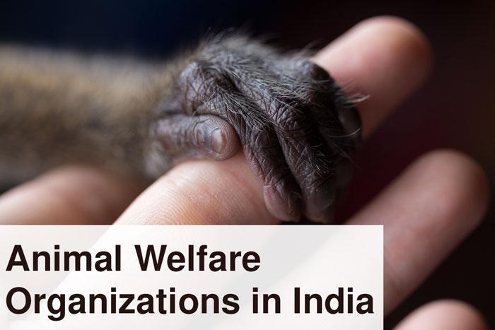 Animal Welfare Organizations in India