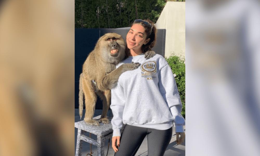 Jeffree Star And James Charles' Monkey Handler Reprimanded
